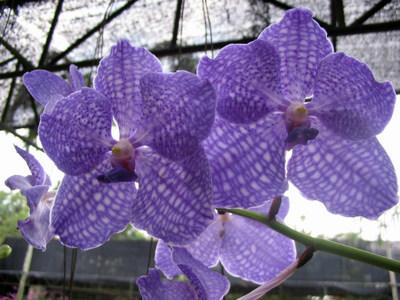 Журнал Планета Орхидей архив 57