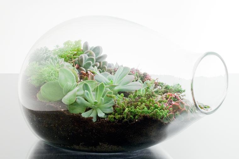 Растения для закрытого флолариума