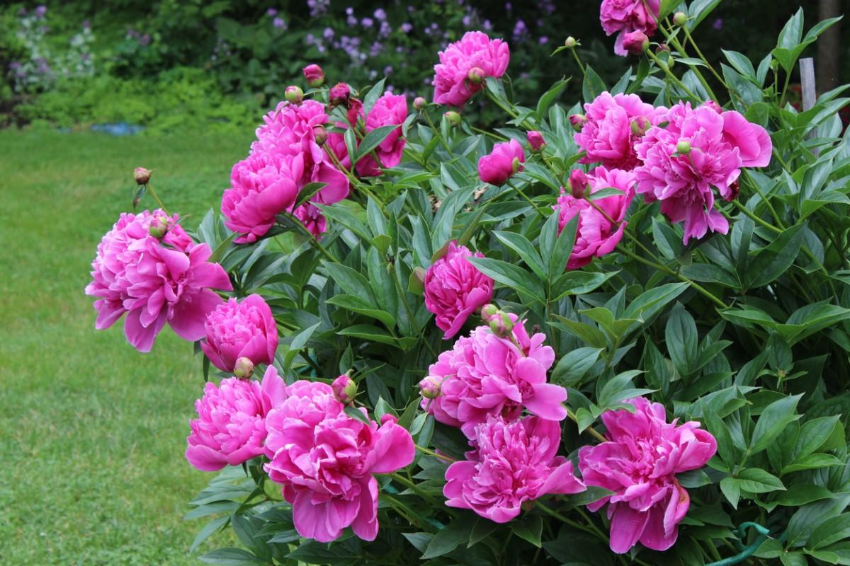 Особенности цветов и уход за ними
